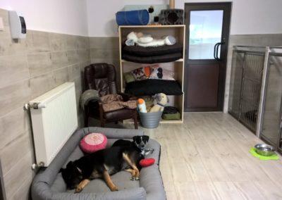 hotel dla psow i kotow lublin weterynarz gabinet wterynaryjny