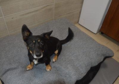 hotel dla psów i kotów lublin lecznica weterynarz lublin 2