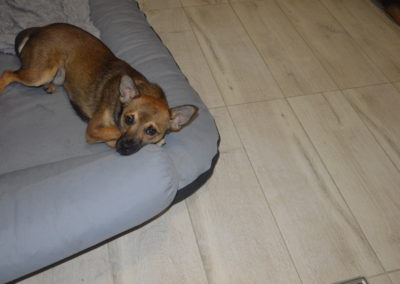 hotel dla psów i kotów lublin lecznica weterynarz lublin 3