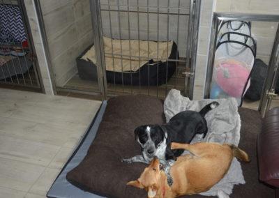 hotel dla psów i kotów lublin lecznica weterynarz lublin 6