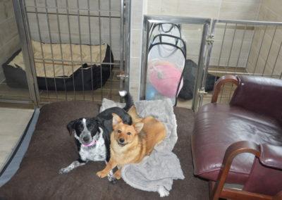 hotel dla psów i kotów lublin lecznica weterynarz lublin 7
